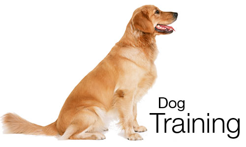 Dog training kingdom