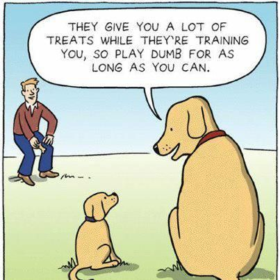 Basic dog training tips
