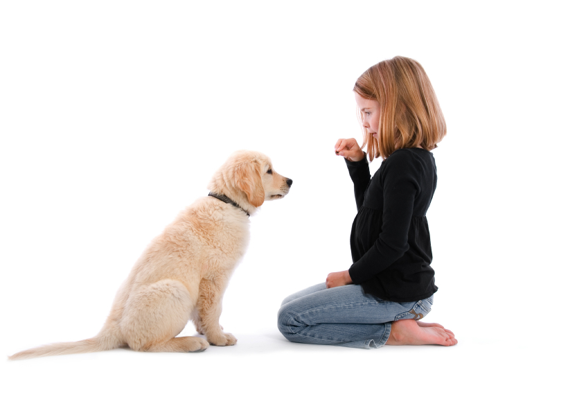 Good dog training tips