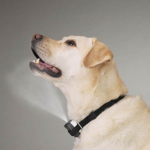 Citronella bark collar