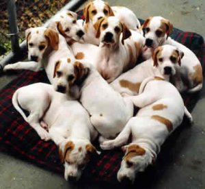 How to find a dog breeder