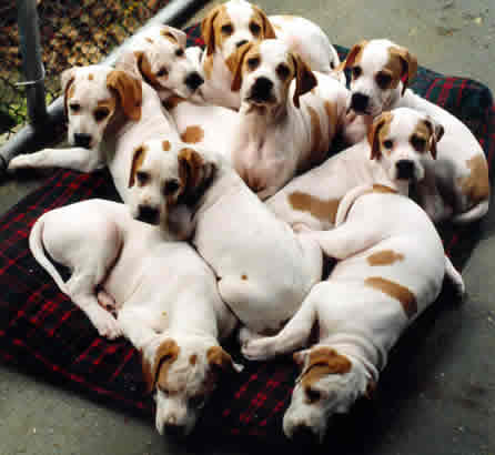 Can Dogs Reproduce With Siblings