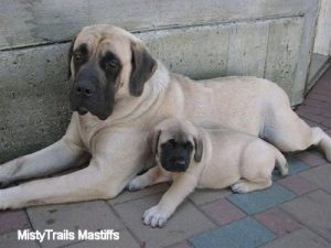 Puppy or a large dog