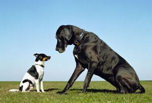 Small or big dog