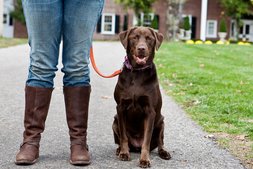 How To Train Dog To Walk On A Loose Leash