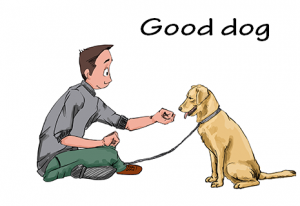Socialize with your dog
